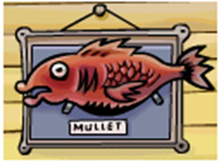 CATCH THE MULLET IN FISHING-when you see the mullet in the background